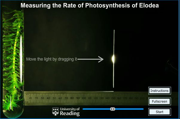 photosynthesis in elodea lab The use of co2 by elodea during photosynthesis  obtain the elodea a few days in advance of the lab and enhance growth with an artificial.