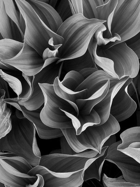 Abstract Leaves.