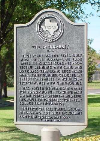 The story of the jackrabbit in Odessa, Texas www.shawnastringer.com