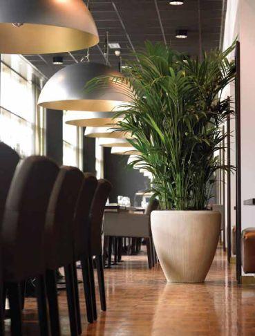 Kentia palm in natuurlijke polystone pot.