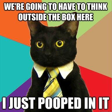 Business cat poop meme -