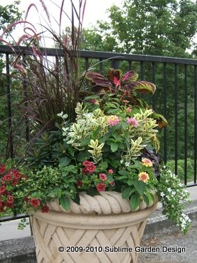 55 best container planting 2015 images on Pinterest Gardening