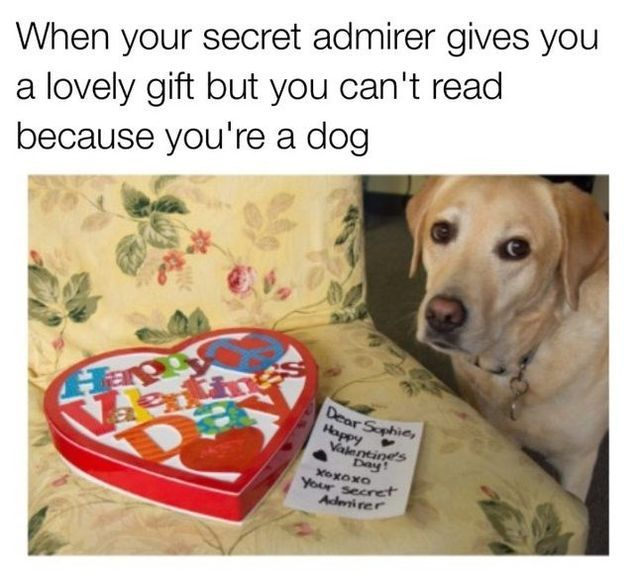 15 Valentine S Day Memes Funnyfoto Valentines Day Memes Funny Pictures Cute Animals With Funny Captions