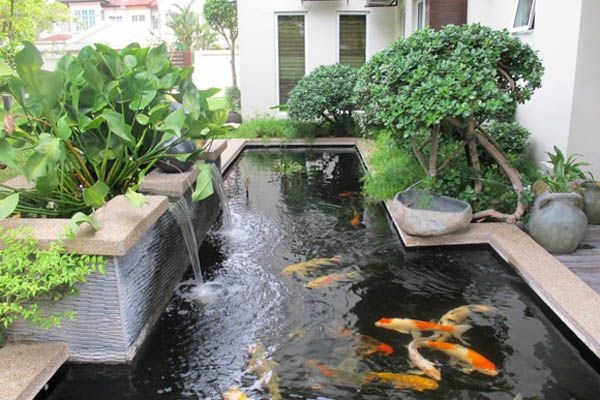 Hồ cá koi nhỏ, ho ca koi nho.Website: http://nonbothanhson.com.vn/ho-ca-koi/ho-ca-koi-nho/