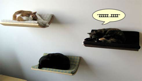 Cat wall shelves are the new thing in cat napping!  CoolKittyCondos.com