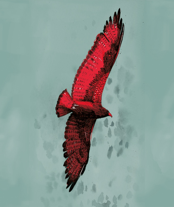 Red Hawk by Eric Tiedt