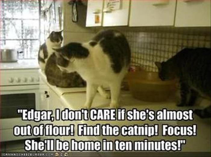 Best Cats Images On Pinterest Crazy Cats Animals And Cats - Animal shelter makes hilarious low budget cat commercial that ends up going viral
