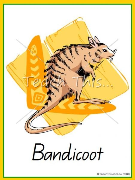 Australian Animals - 21 cards - Printable Picture Theme Flash Cards / Classroom Displays, Teacher Resources :: Teach This
