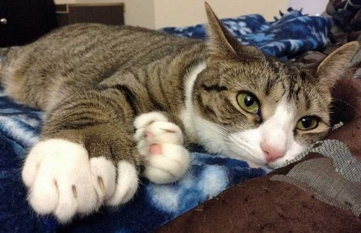 There's so much more to these kitties than their adorably big feet.
