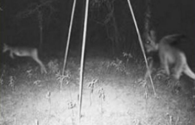jersey devil pictures - Google Search