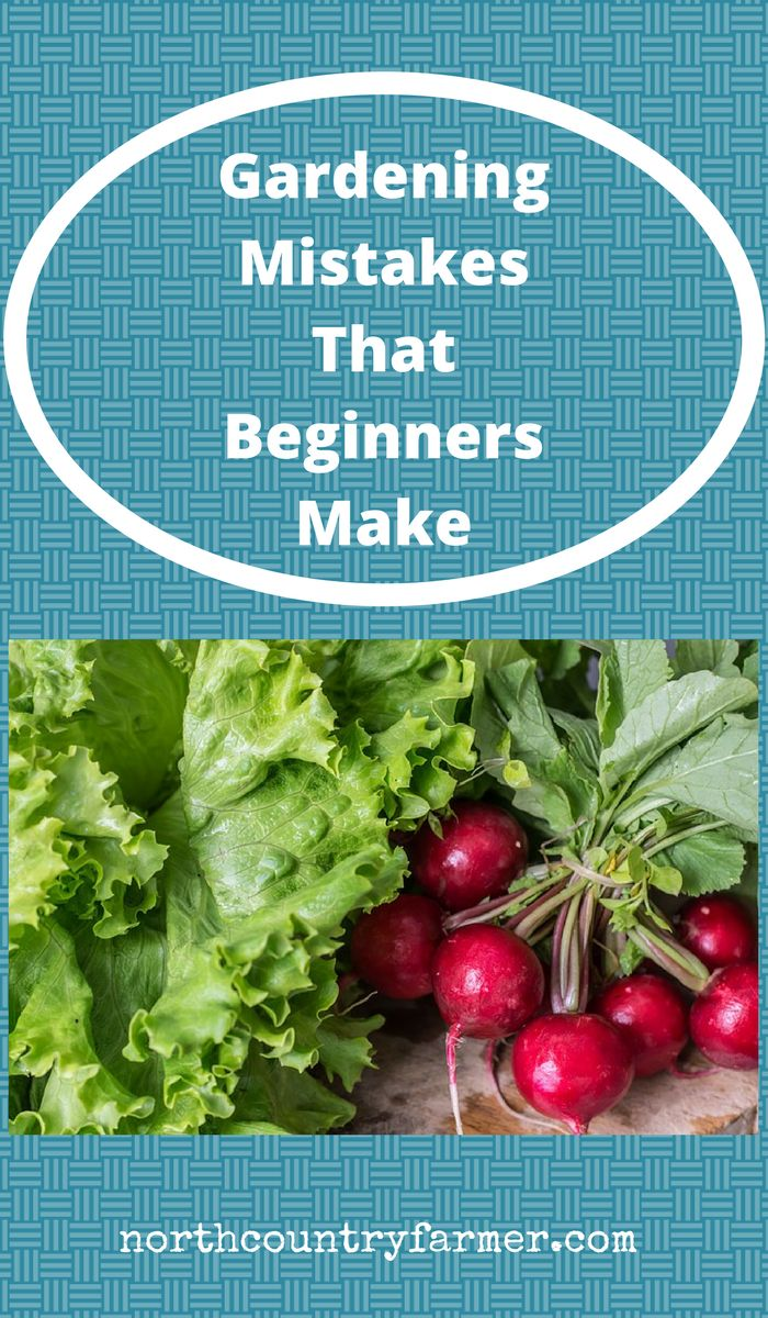 On this episode of the North Country Farmer Show, Scott looks at common mistakes beginning gardeners make and how you