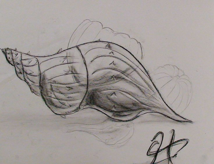 Contour Line Drawing Pumpkin : Best images about shell on pinterest sea shells