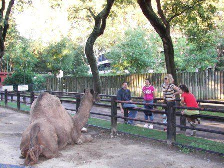 Dromedario en el Zoo de Buenos Aires #argentina #buenosaires