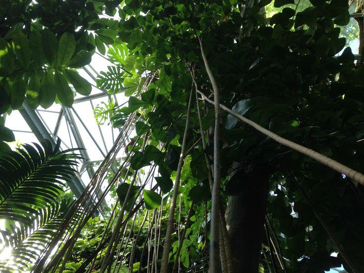 De paseo por Ámsterdam nos encontramos una jungla en medio de la ciudad! #plantas #ciudad #amsterdam #arboles #invernadero #tropical #vacaciones #Holanda #lianas #hojas #palmeras