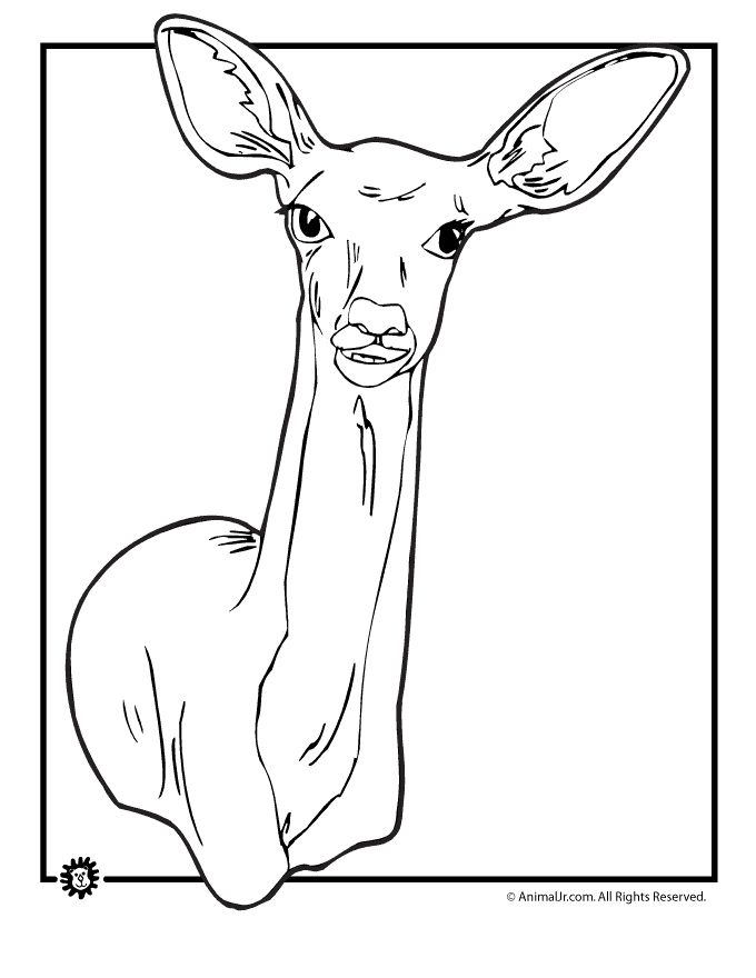deer coloring pages doe coloring page animal jr - Coloring Pages Of Deer 2