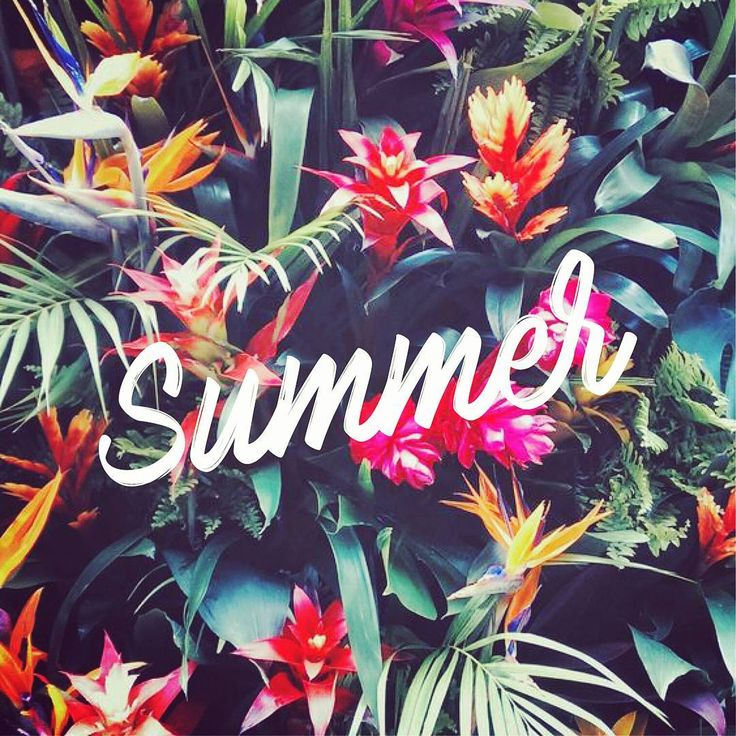 Summer lover - jungle - flowers - colors - colorful - palm tree lovers