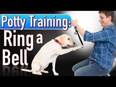 Potty Training: How to Train your Dog to RING A BELL to be Let Outside - YouTube