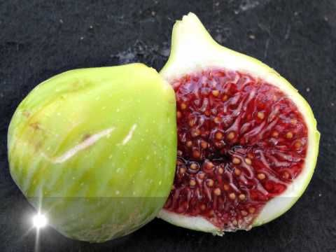 Fig varieties of UC Davis California  - the music behind it is not too shabby either!