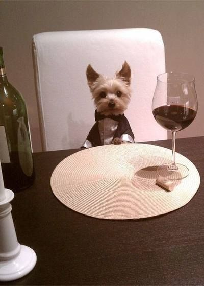 Or you could just take a seat and have a fine dinner with this young gentleman. | 27 Dogs Who Are Guaranteed To Make You Smile