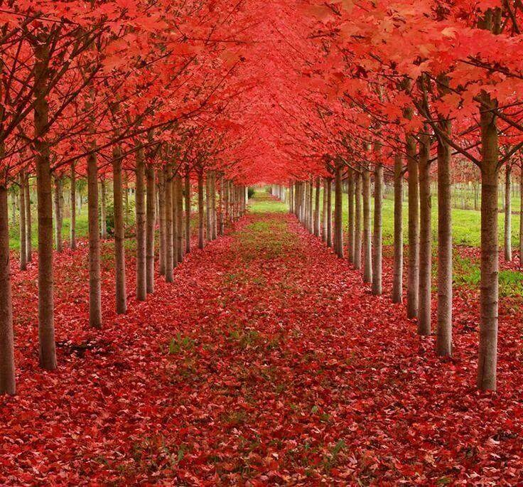 Walk through autumn
