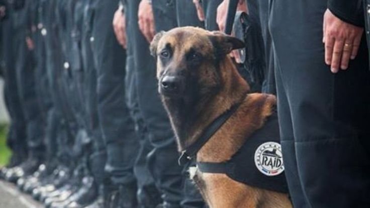 Na Argentina, cachorro policial ganha patente de Sargento do Exército