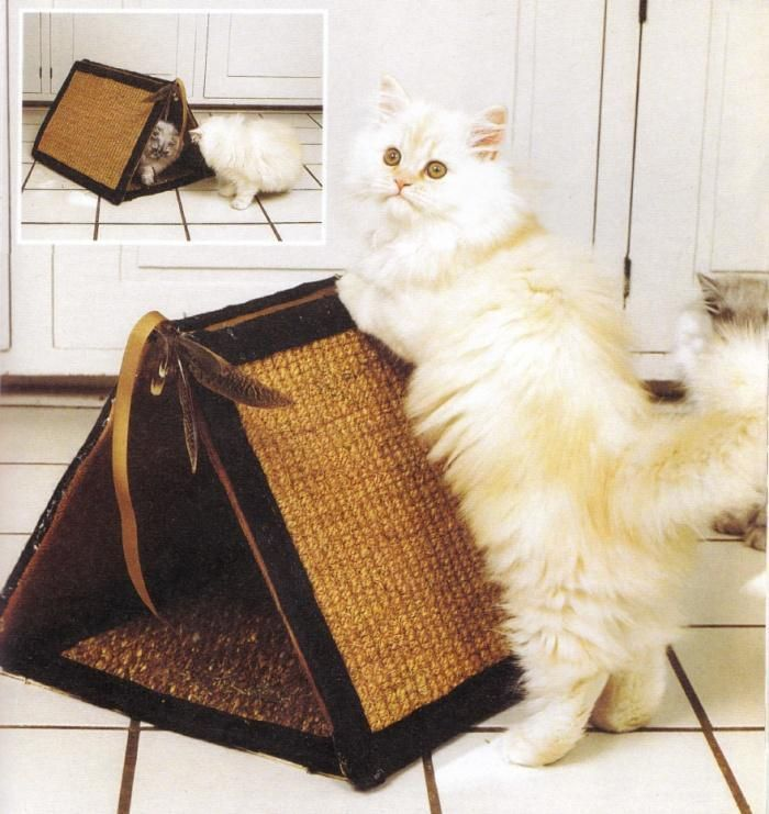 Фото свой руки кошка для домик