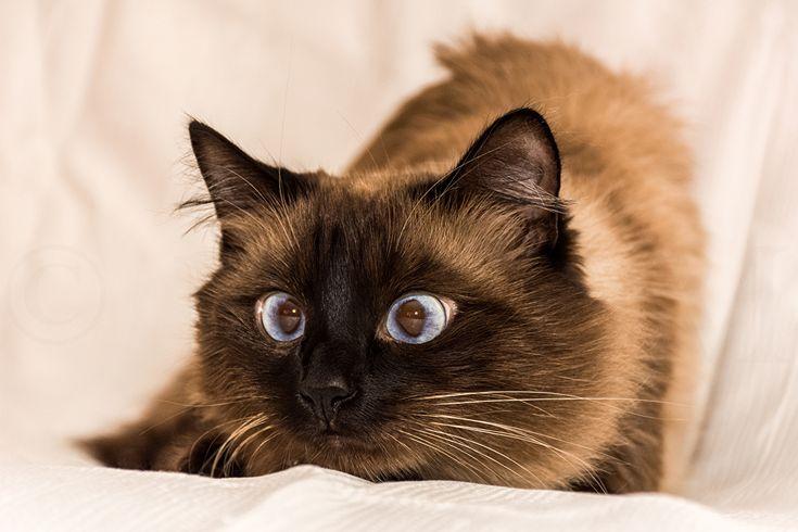Bilder von Tiere Katze Lustige Starren 1ZOOM Blick