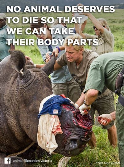 Leaked Animal Abuse Video Shows Everything That's Wrong with Big Game Hunting - Motherboard has gotten its hands on some horrifying footage of hunting and wild animal abuse in Tanzania, where a company known as Green Mile Safari has been caught allowing its clients to hunt protected animals with semi-automatic weapons, run over animals with jeeps, and otherwise torture animals before killing them.
