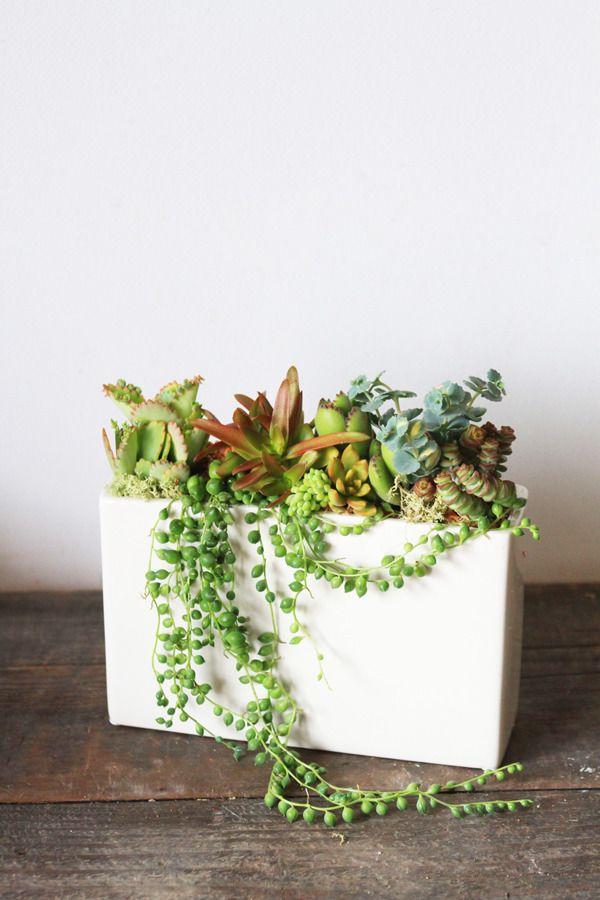 スクエア陶器の多肉植物寄せ植え