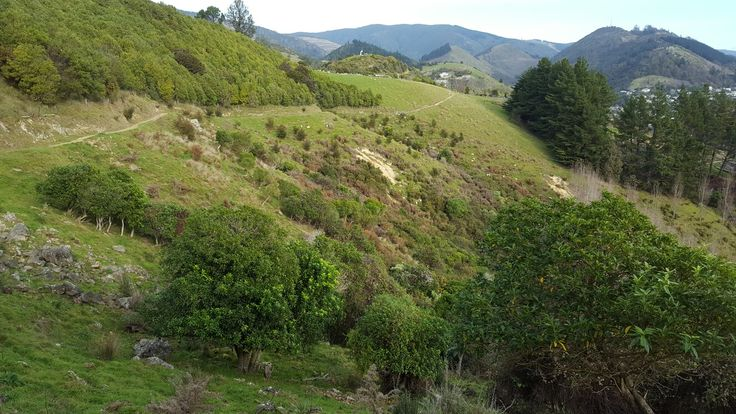 A beautiful day for walking in the hills just outside Nelson, New Zealand