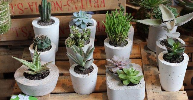 Jardinería, realiza tus propias macetas de cemento