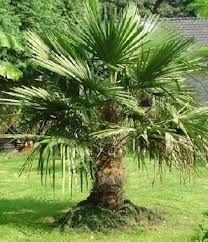 palmeras de interior <3