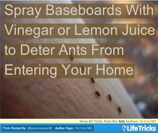 ants spray baseboards with vinegar or lemon juice to deter ants from entering your home life. Black Bedroom Furniture Sets. Home Design Ideas