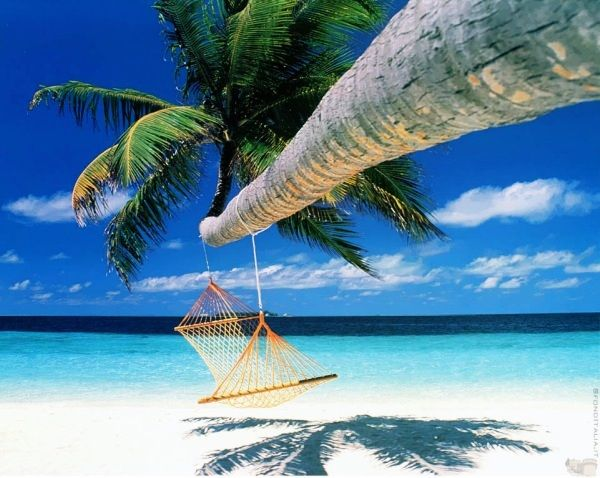 i just need 15 minutes here..Dreams, Oahu Hawaii, Hammocks, French Polynesia, Best Quality, Travel, Beach, Places, Borabora