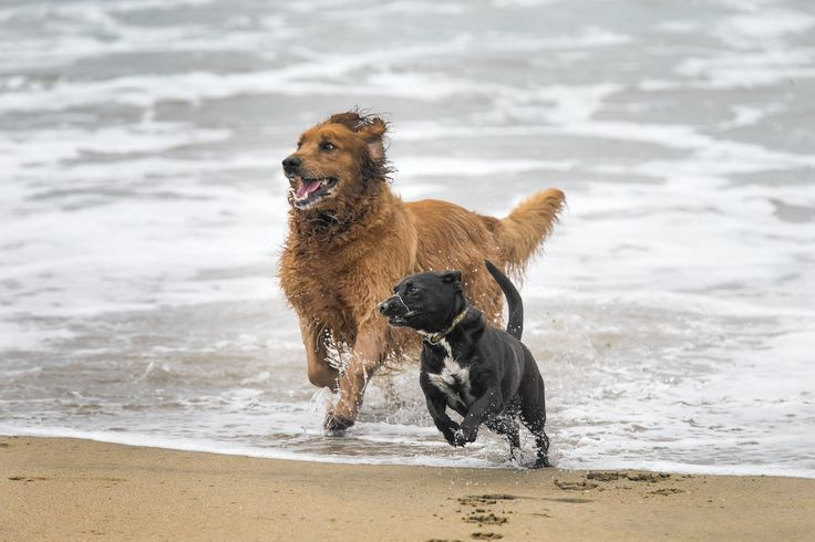 Best Off Leash Dog Parks San Diego