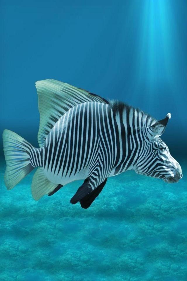ZEBRA FISH! It's a ZISH or a FEBRA