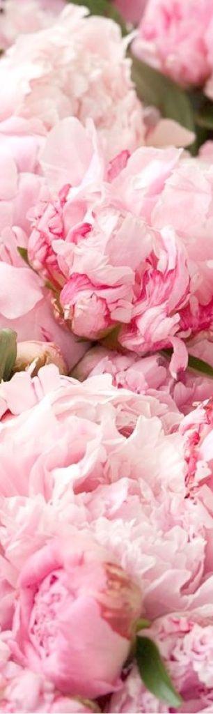 Frivolous Fabulous - Romantic Pink Peonies a cooler climate flower.