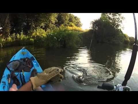 Pêche du silure à vue en kayak : Canicule, corbicule et silures. Un soir en Seille. - YouTube