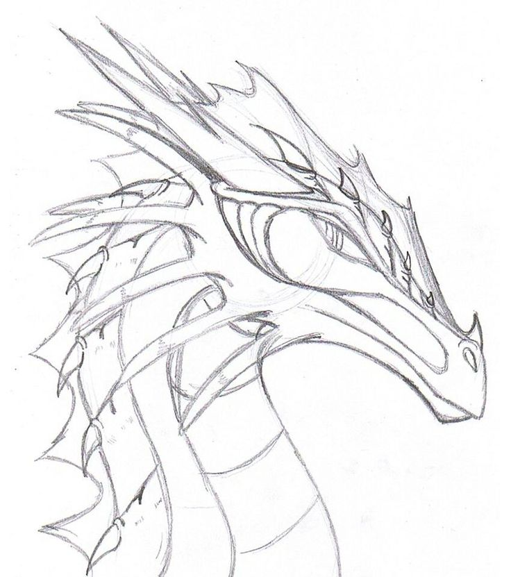 realistic dragon drawings - Google Search