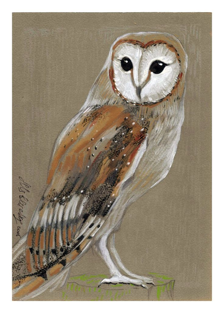 Barn Owl - Original mixed media Painting 6x8 inches Bird wild nature Winter Snow by nekoBlueSKY on Etsy