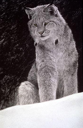 Snowy Range – Canada Lynx