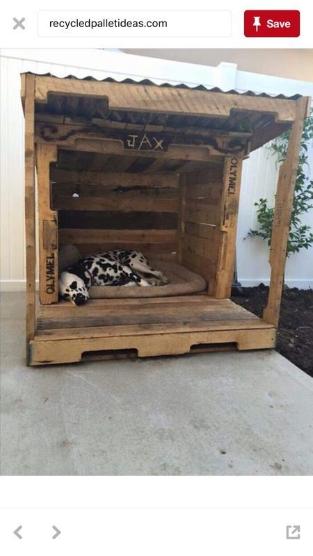 The maxx dog house