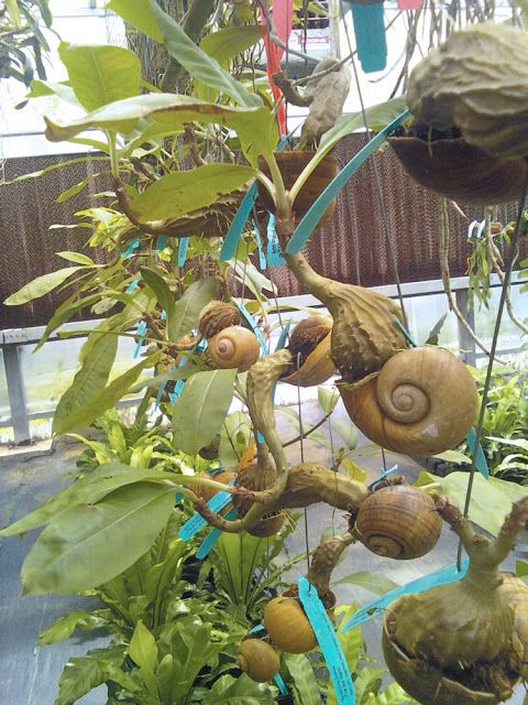 The Rainforest Garden: Extremely Unusual Plants at the Orchtoberfest