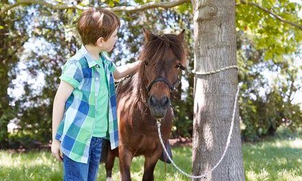Ecurie du Rasteou à Les Arcs : Balade à poney ou cheval: #LESARCS 17.50€ au lieu de 25.00€ (30% de réduction)