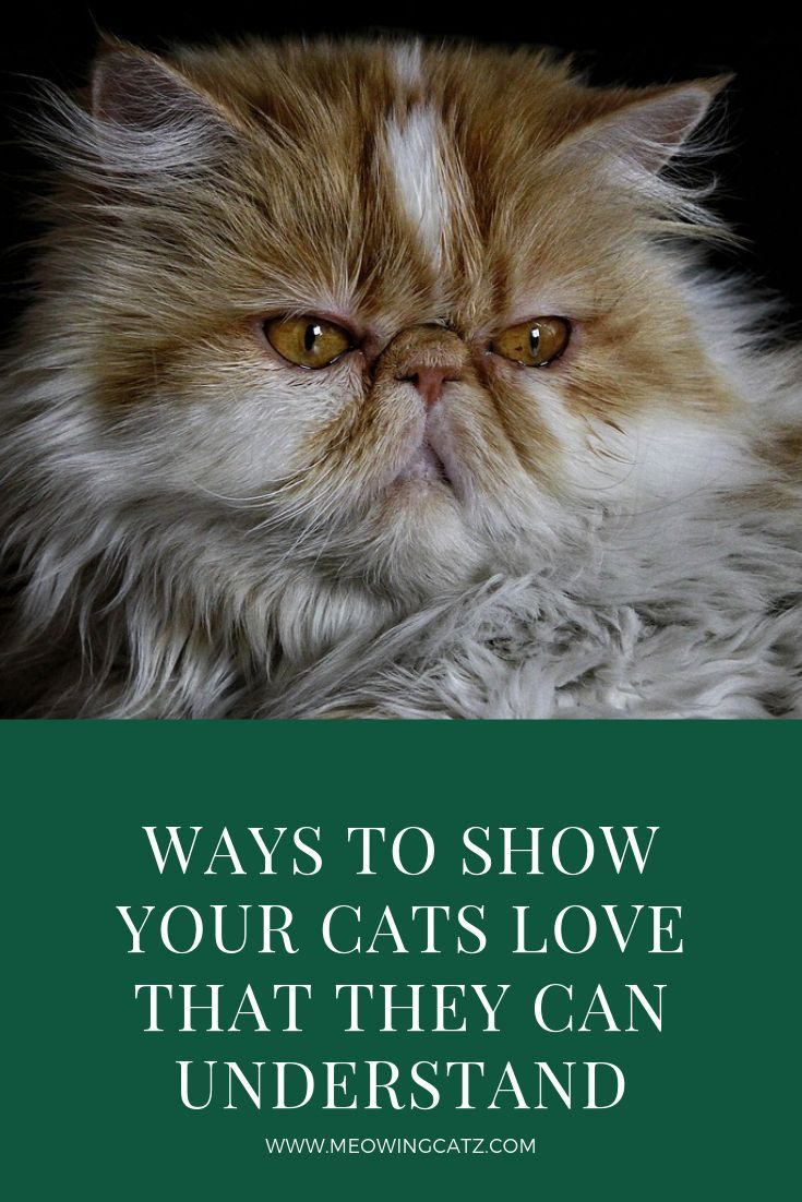 Top 10 Ways To Show Your Cats You Love Them Cat Love Cats Cats