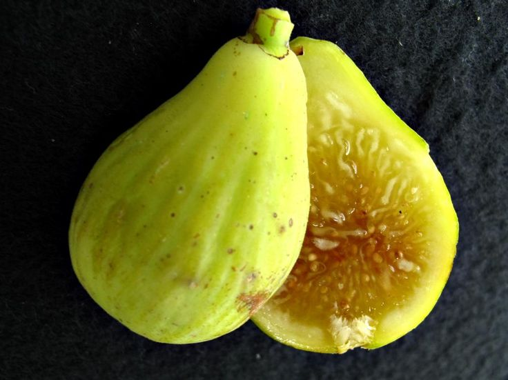 Hollier Fig Varieties Collection Trees Of Joy Garden