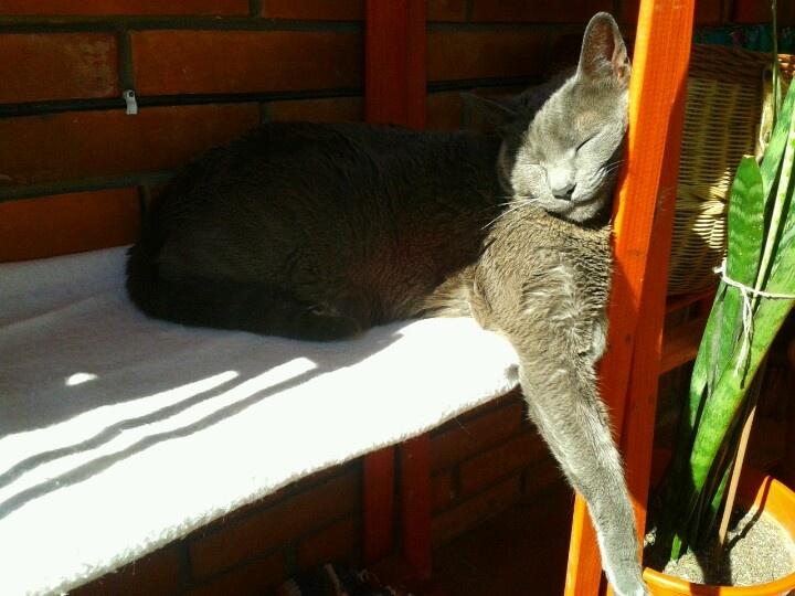 Coco & the sun