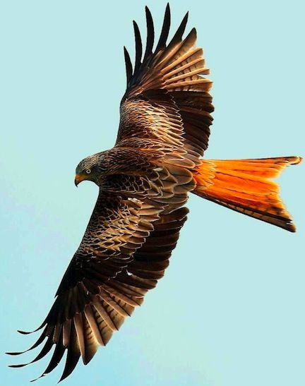 Red Kite on 3.2.13 near Junction 32 of the M1 not sure where thats near!