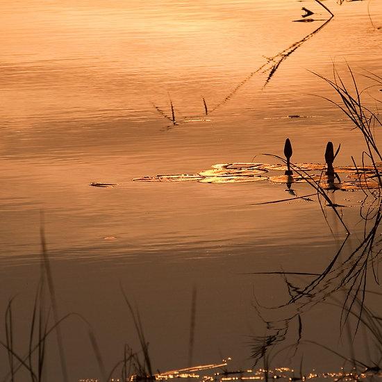 On Golden Pond. Kwando River.