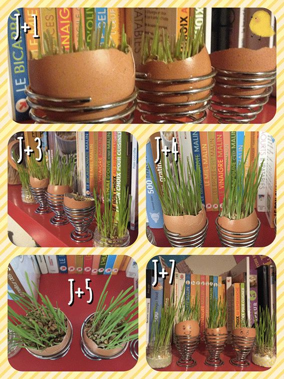 66 best Jardin du0027intérieur images on Pinterest Gardening, Cuttings - creer sa cuisine en d gratuit
